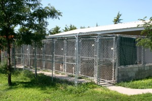 Ringneck Ranch Kennel