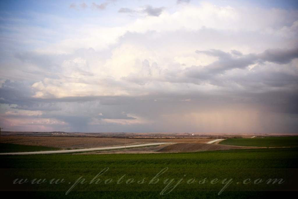 Kansas Storm at Ringneck Ranch Kansas Pheasant Hunting Outfitter